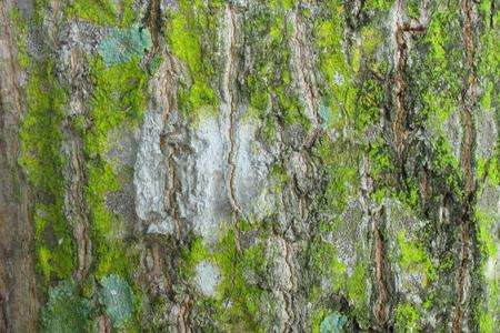 brak: Brak wood wallpaper1