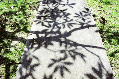 Shadow of green tree in garden, shadow on ground floor, Holiday time walk in green park, green yard
