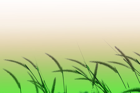 Grasblätter mit weißem Sonnenlicht am Morgen, Blumengras neben der Straße, grüne Grasblätter im Garten mit Sonnenaufgang, abstrakter Naturhintergrund, frisches grünes Gras bei strahlendem Sonnenschein