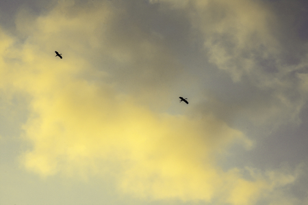Sunset sky background, Golden light of sunset with bird flying on clouds sky Imagens