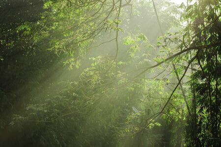 Beautiful light of morning sun in Thailand, Sun light shine through the tree in morning, Beautiful flare light of beginning new day with warm sunbeam light, Atmosphere of morning in rural