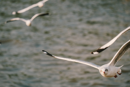 Seagull flying on beautiful blue sea