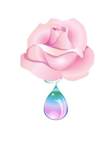 moisturizing: from a rose falls a drop light