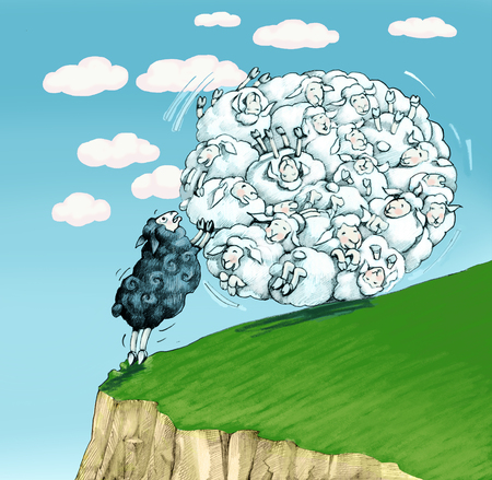 outsider: black sheep trying to stop a herd that rolls into a ravine Stock Photo