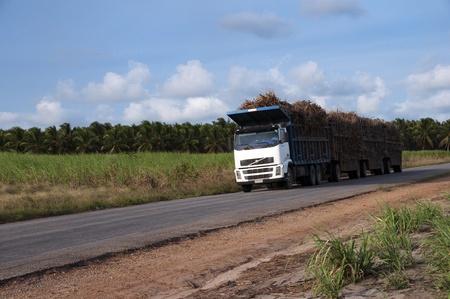 Truck transporting sugar cane