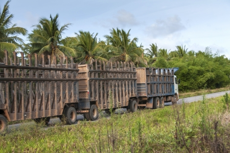 ethanol: Truck for the transport of sugar cane for the production of ethanol in Brazil