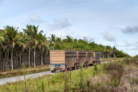 cane sugar: Truck for the transport of sugar cane for the production of ethanol in Brazil