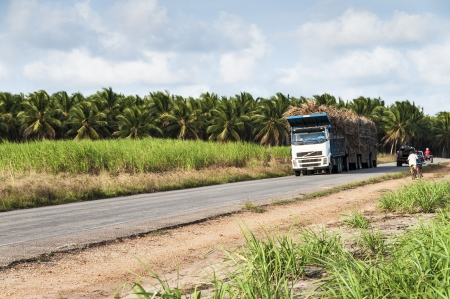ethanol: Truck for the transport of sugar cane for the production of ethanol on Oct 20, 2008 in Joao Pessoa, Brasil.
