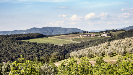 olive groves: Vineyards and olive groves of the Tuscan hills in spring
