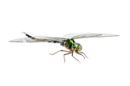 Dragonfly macro isolated on white background  photo