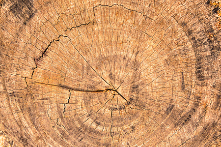 Close up of the rings of a  cut tree  Wooden background  photo