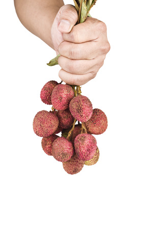 litchi: Lychee (Litchi chinensis) fruit on hand on white background.