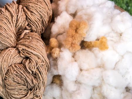 Cotton balls in the basket with thread, (Gossypium hirsutum L.), Malvaceae. Stok Fotoğraf