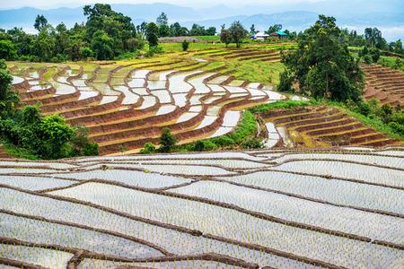 pa: Rice terrace at Pa Bong Piang village Chiang mai, thailand
