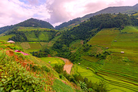 Rice fields on terraced beautiful shape of Mu Cang Chai, YenBai, Vietnam. Rice fields prepare the harvest at Northwest Vietnam.Vietnam landscapes.
