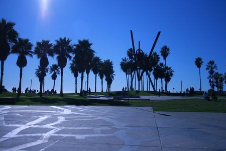 palm venice beach