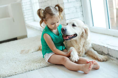 Happy child with a dog. Portrait of a girl with a pet. Labrador Retriever at home. . High quality photo.