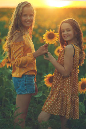 Girlfriends of the girl laugh and play sunflower. Baby girl in sunflowers. High quality photo.