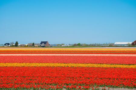 Amazing Netherlands Landscape Stock Photo