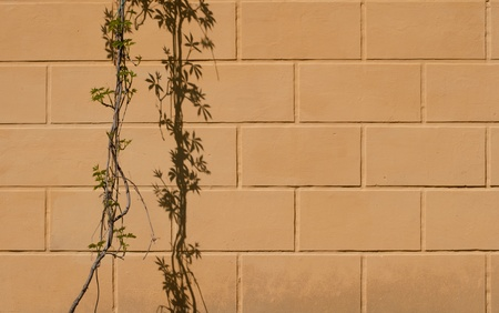 Close up stone wall texture with grapevine and its shadow photo