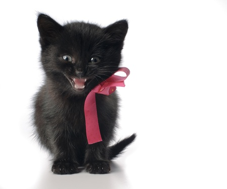 Small kitten with ribbon isolated on white background Stock Photo