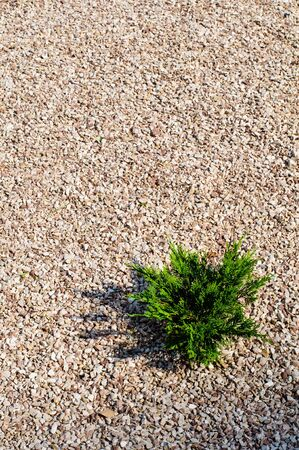 High resolution gravel texture with small details photo