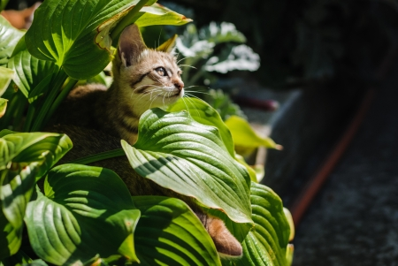Little kitten playing in the garden close up