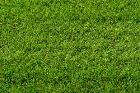 Close-up image of fresh spring green grass photo