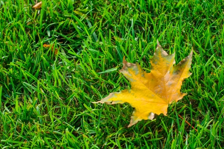 Yellow autumn leaf on green grass closeup photo