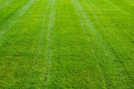 Striped green grass texture with perspective view Stock Photo