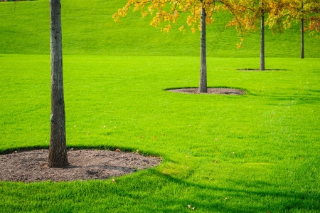 Trees trunk with green grass background. Closeup photo
