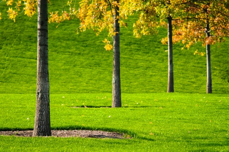 Trees trunk with green grass background. Closeup