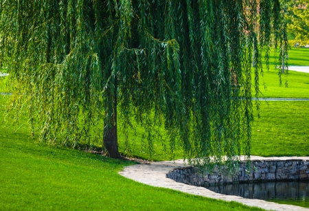 Landscape from a park with willow near the pond photo