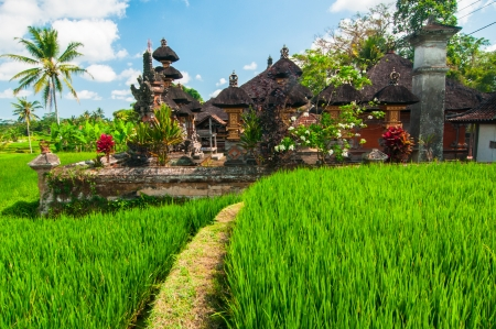 terraced field: Rice terrace and small temple at background, Bali, Indonesia Stock Photo
