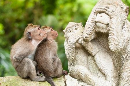 Long-tailed makaków (Macaca fascicularis) w Sacred Monkey Forest, Ubud, Indonezja