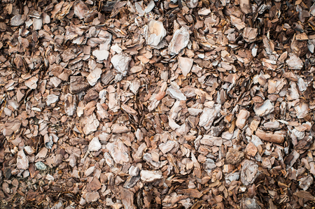 Bark of tree used for mulching. Closeup texture photo