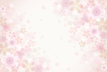 cherry blossom: Sakura blossoms background Illustration