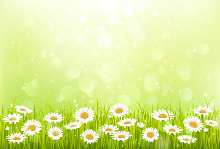 Spring background with green grass and flowers