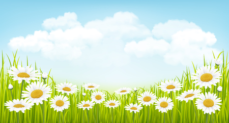 Spring background with green grass, flowers and blue sky Vectores