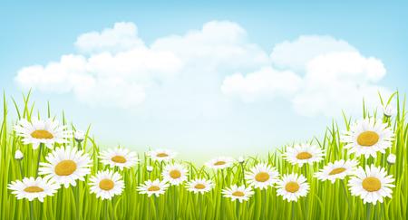 Spring background avec de l'herbe verte, des fleurs et ciel bleu
