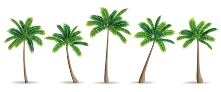 Palmen Vektorgrafik