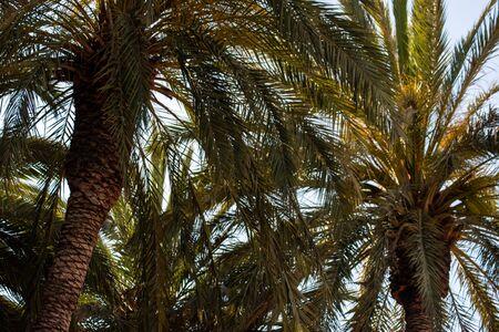 Pattern palmas and light blue sky spring