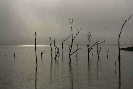 Fog Clearing on Lake Zdjęcie Seryjne
