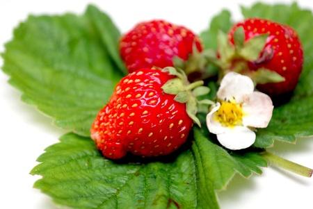 wild strawberry  photo