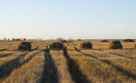 fields and hay, cleaning up by the tractor of the fields photo