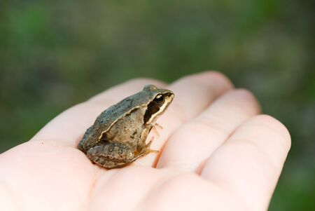 frog on a hand on a background nature Stock Photo - 10171869