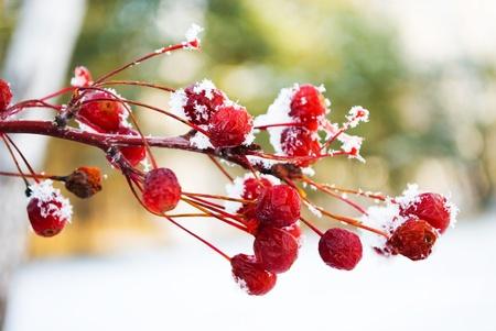 berry Stock Photo - 10212935