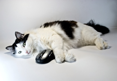 plucky: cat and computer mouse together Stock Photo