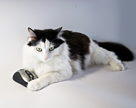 cat and computer mouse together Stock Photo - 10244020