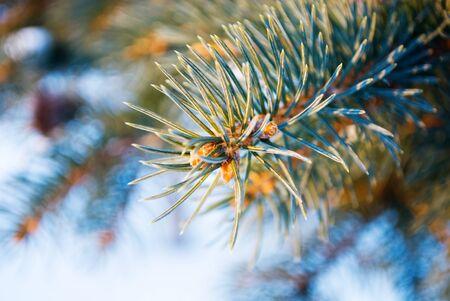 frostily: branch